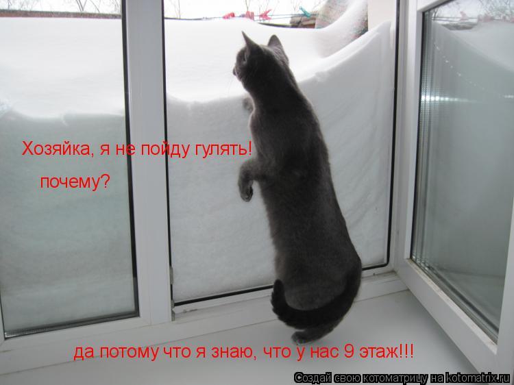 Котоматрица: Хозяйка, я не пойду гулять! почему? да потому что я знаю, что у нас 9 этаж!!!