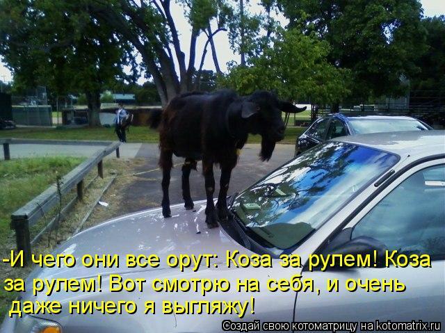 Котоматрица: -И чего они все орут: Коза за рулем! Коза  за рулем! Вот смотрю на себя, и очень   даже ничего я выгляжу!