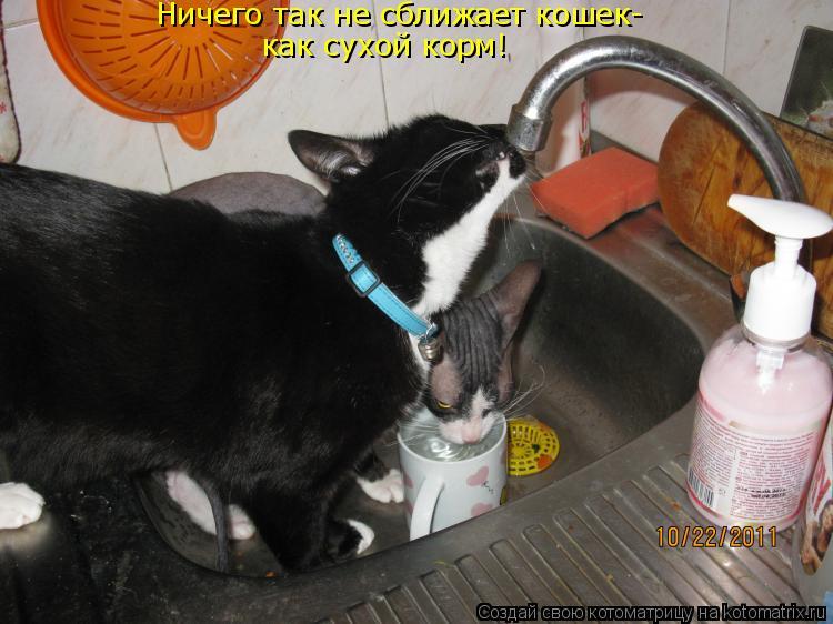 Котоматрица - Ничего так не сближает кошек- как сухой корм!