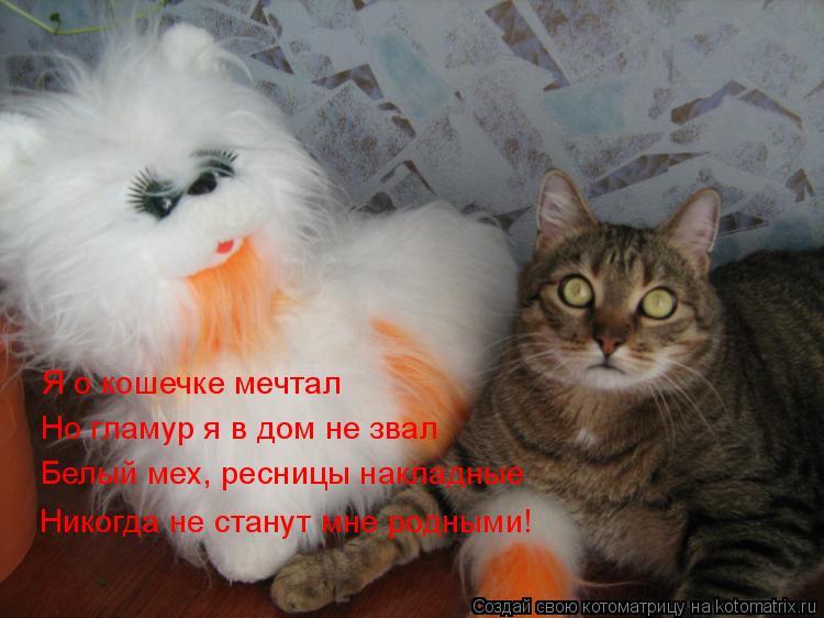 Котоматрица: Я о кошечке мечтал Но гламур я в дом не звал Белый мех, ресницы накладные Никогда не станут мне родными!
