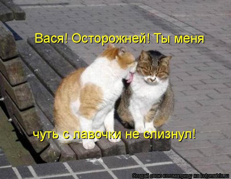Котоматрица - Вася! Осторожней! Ты меня чуть с лавочки не слизнул!