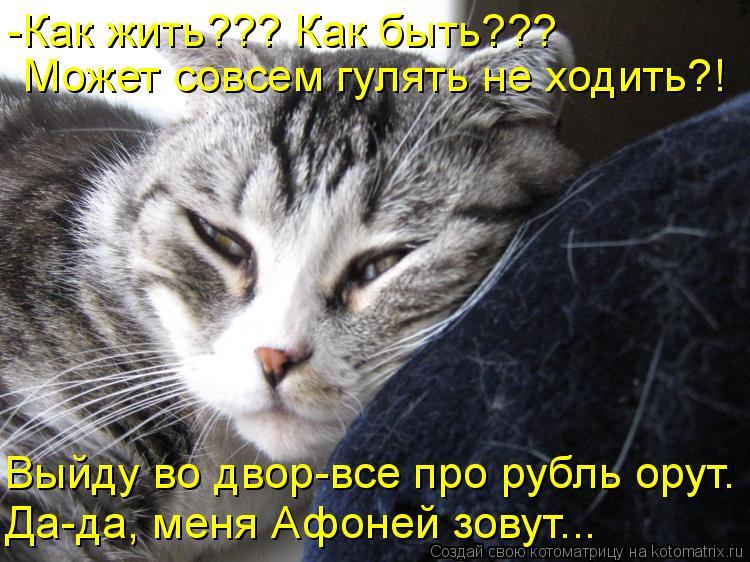 Котоматрица: -Как жить??? Как быть??? Может совсем гулять не ходить?! Выйду во двор-все про рубль орут. Да-да, меня Афоней зовут...