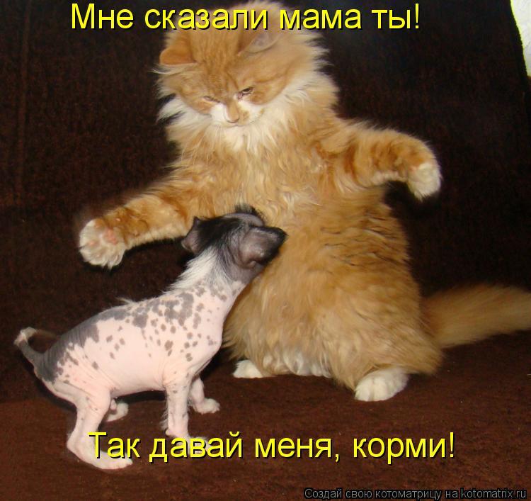 Котоматрица: Мне сказали мама ты! Так давай меня, корми!