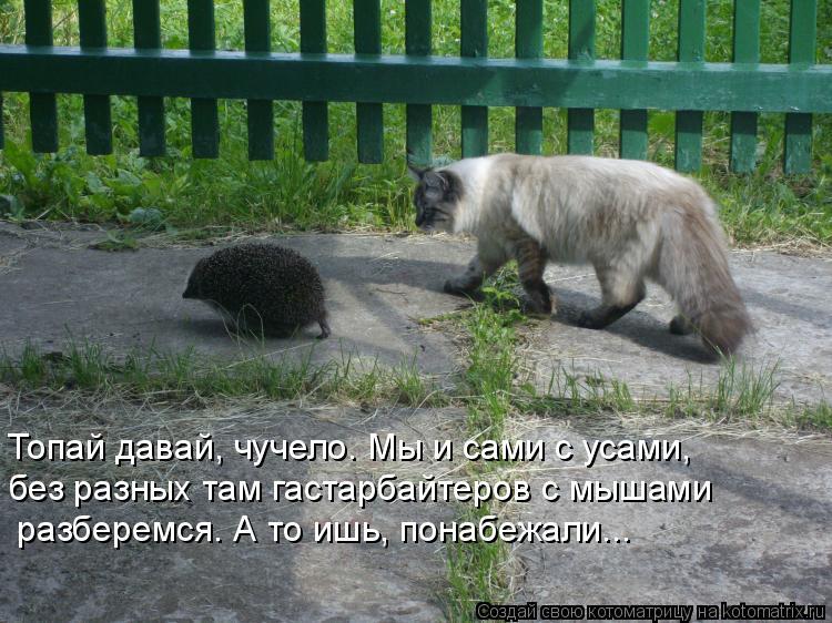 Котоматрица: Топай давай, чучело. Мы и сами с усами, без разных там гастарбайтеров с мышами  разберемся. А то ишь, понабежали...