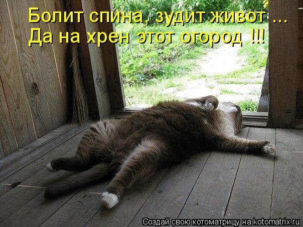 Котоматрица: Да на хрен этот огород !!! Болит спина, зудит живот ...