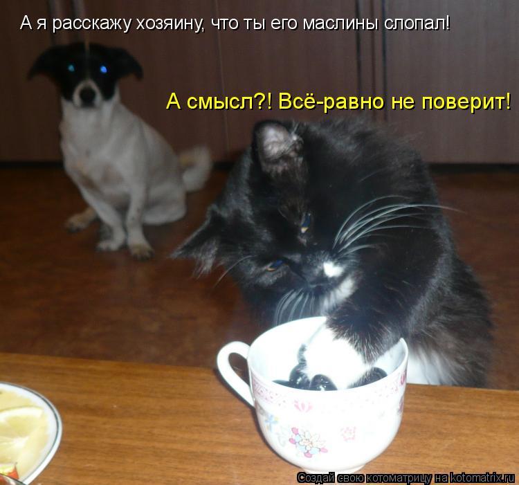 Котоматрица: А я расскажу хозяину, что ты его маслины слопал! А смысл?! Всё-равно не поверит!