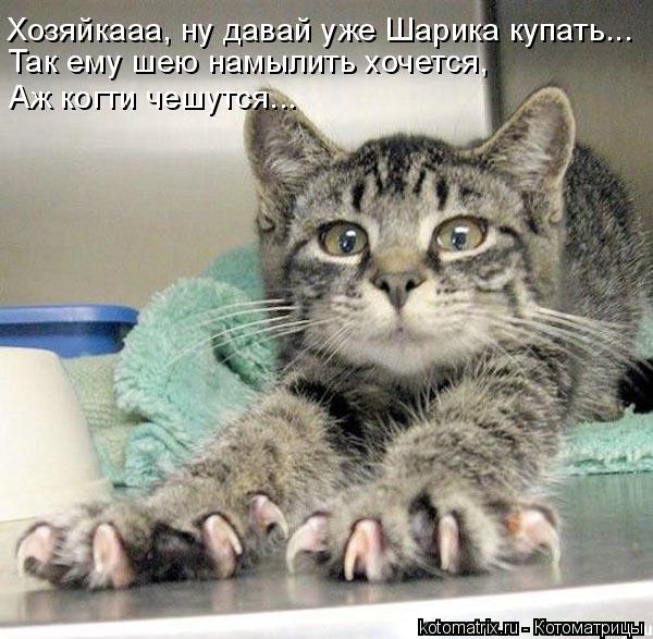 Котоматрица: Хозяйкааа, ну давай уже Шарика купать... Так ему шею намылить хочется, Аж когти чешутся...