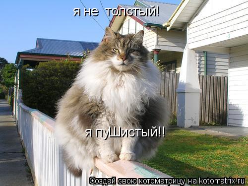 Я не толстый я пушистый кот