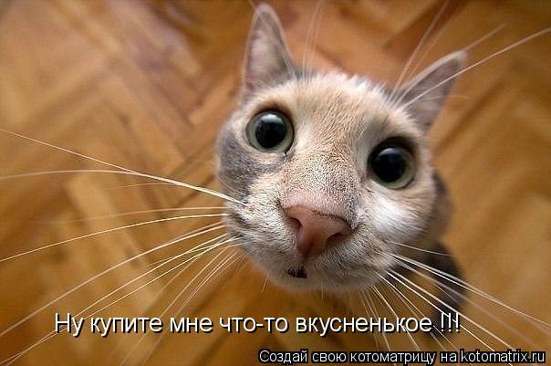 Котоматрица: Ну купите мне что-то вкусненькое !!!