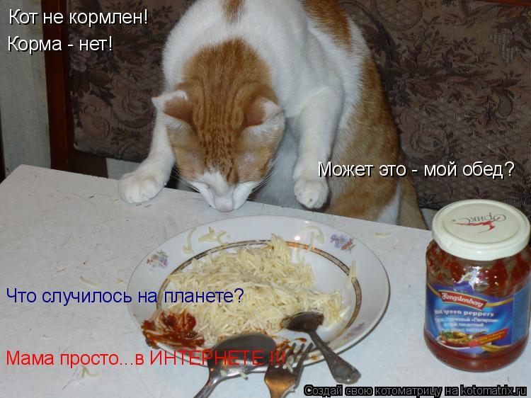 Котоматрица: Кот не кормлен!  Корма - нет!  Может это - мой обед? Что случилось на планете? Мама просто...в ИНТЕРНЕТЕ !!!