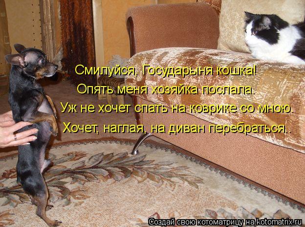Котоматрица - Смилуйся, Государыня кошка! Опять меня хозяйка послала.  Уж не хочет с