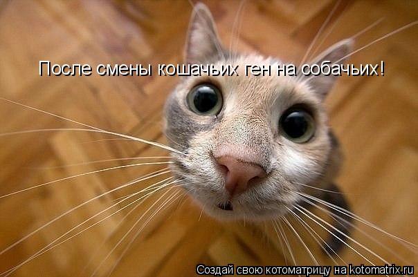 Котоматрица: После смены кошачьих ген на собачьих!