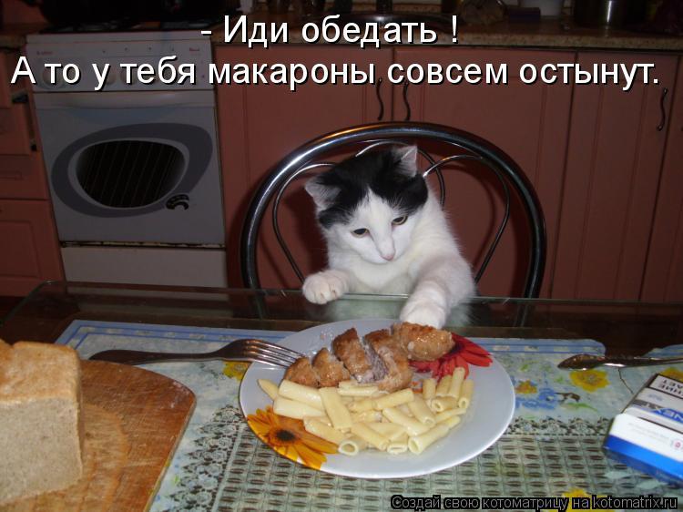 Котоматрица: - Иди обедать ! А то у тебя макароны совсем остынут.