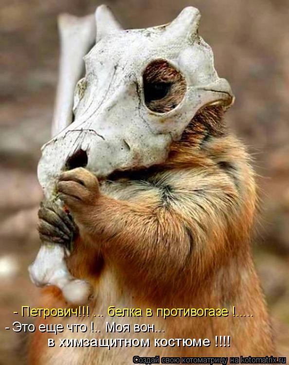 http://kotomatrix.ru/images/lolz/2012/02/13/1110509.jpg