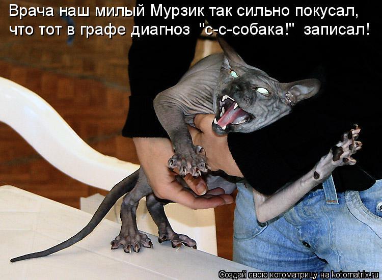"""Котоматрица: Врача наш милый Мурзик так сильно покусал, что тот в графе диагноз  """"с-с-собака!""""  записал!"""