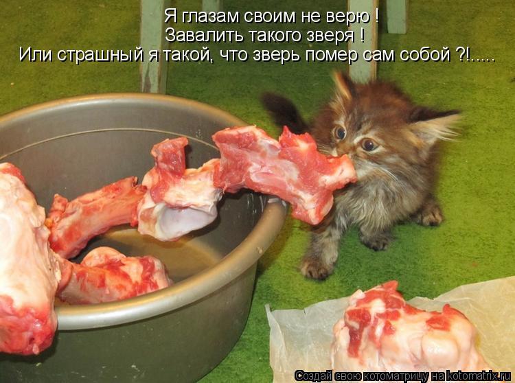 Котоматрица: Я глазам своим не верю ! Завалить такого зверя ! Или страшный я такой, что зверь помер сам собой ?!.....
