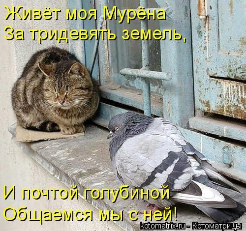 Котоматрица: Живёт моя Мурёна За тридевять земель, И почтой голубиной Общаемся мы с ней!