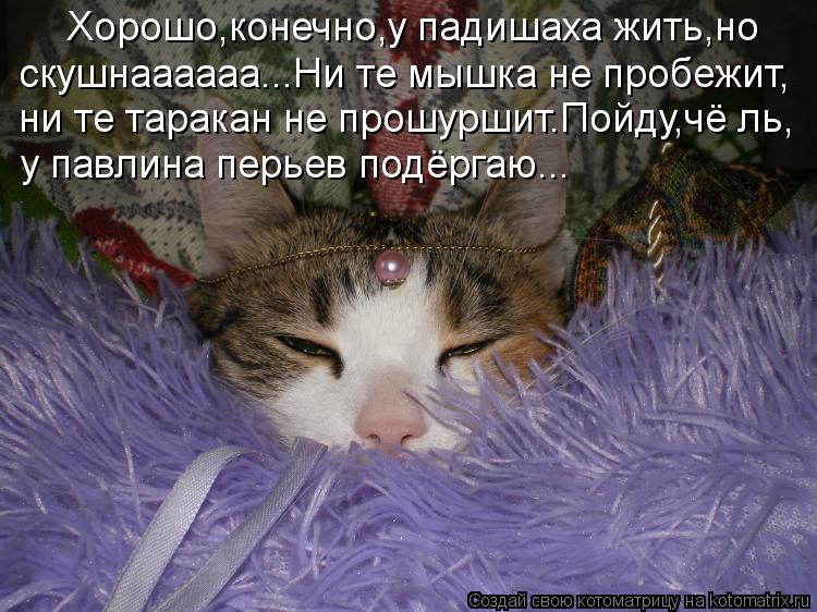 Котоматрица - Хорошо,конечно,у падишаха жить,но скушнаааааа...Ни те мышка не пробежи