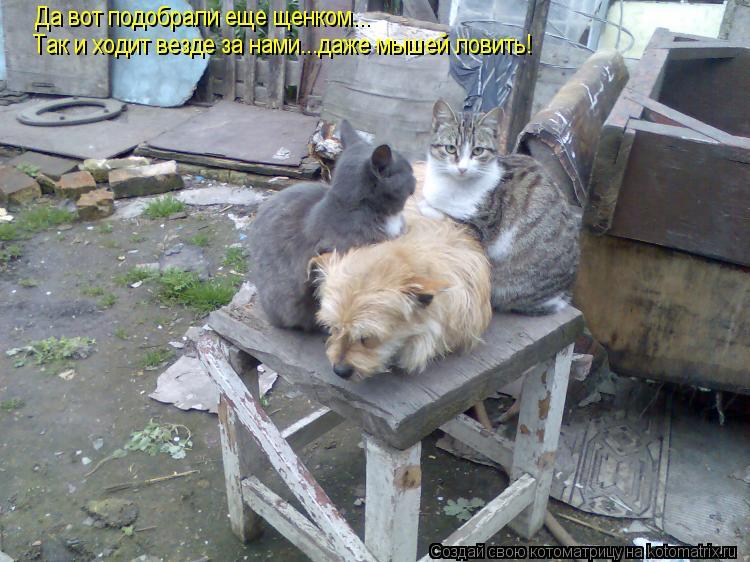 Котоматрица - Да вот подобрали еще щенком... Так и ходит везде за нами...даже мышей