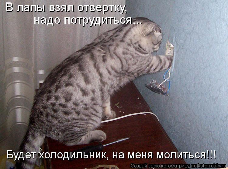 Котоматрица - В лапы взял отвертку, надо потрудиться... Будет холодильник, на меня м
