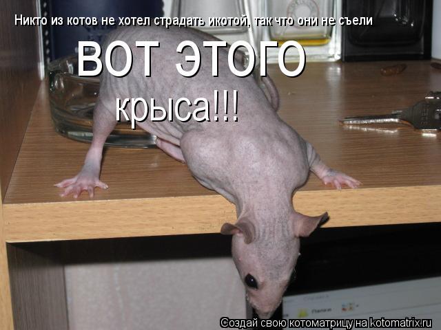 Котоматрица: Никто из котов не хотел страдать икотой, так что они не съели  вот этого крыса!!!