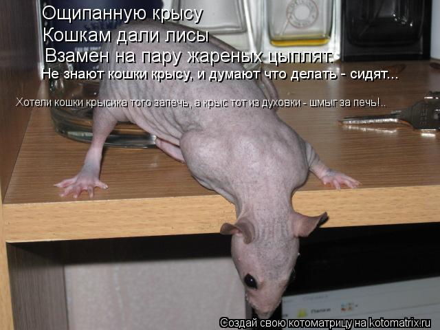 Котоматрица: Ощипанную крысу Кошкам дали лисы Взамен на пару жареных цыплят. Не знают кошки крысу, и думают что делать - сидят... Хотели кошки крысика того
