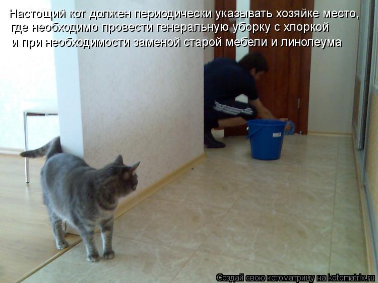 Котоматрица: Настощий кот должен периодически указывать хозяйке место,  где необходимо провести генеральную уборку с хлоркой и при необходимости замен
