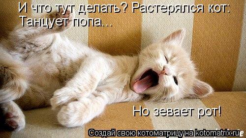 Котоматрица: И что тут делать? Растерялся кот: Танцует попа... Но зевает рот!