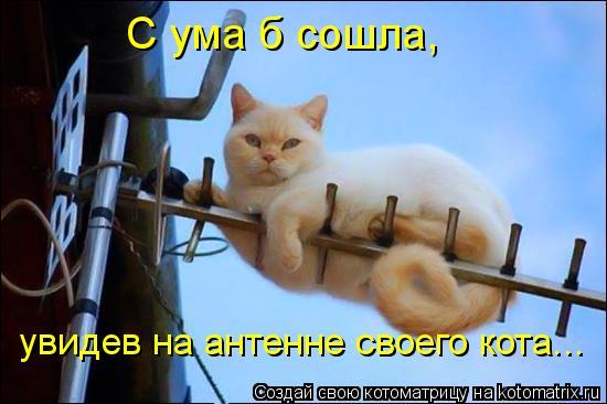 Котоматрица: С ума б сошла,  увидев на антенне своего кота...