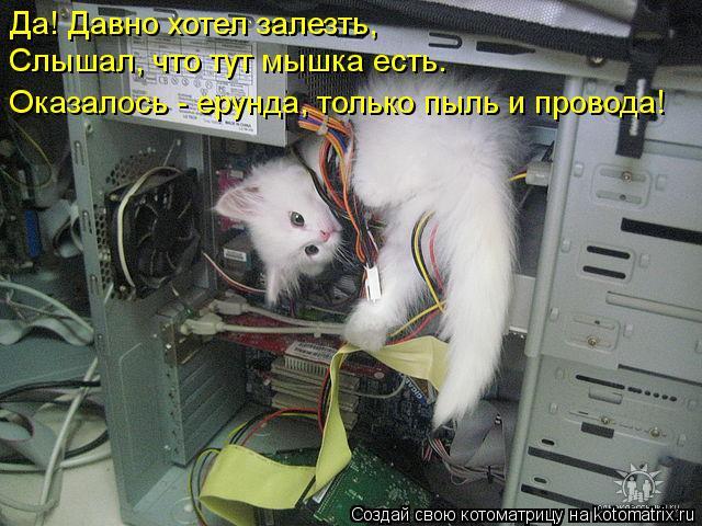 Котоматрица - Слышал, что тут мышка есть.  Да! Давно хотел залезть,  Оказалось - еру