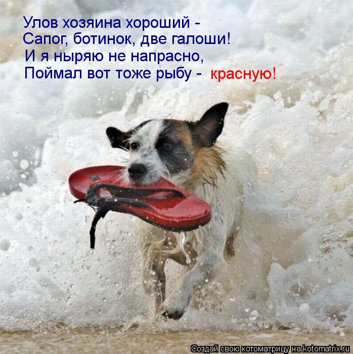 Котоматрица: Улов хозяина хороший -  Сапог, ботинок, две галоши!  И я ныряю не напрасно,  Поймал вот тоже рыбу -  красную!