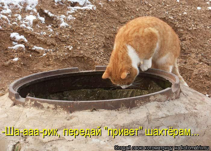 "Котоматрица: -Ша-ааа-рик, передай ""привет"" шахтёрам..."