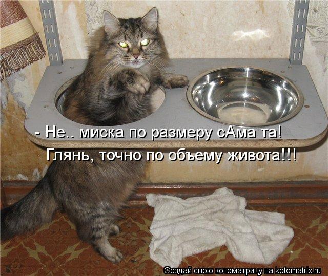 Котоматрица - - Не.. миска по размеру сАма та! Глянь, точно по объему живота!!!