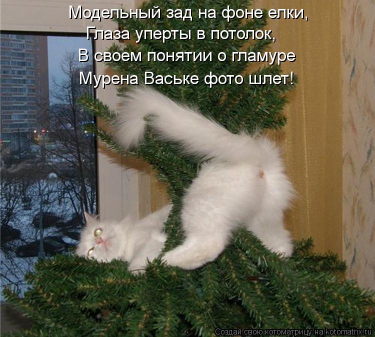 Котоматрица: Модельный зад на фоне елки, Глаза уперты в потолок, В своем понятии о гламуре Мурена Ваське фото шлет!