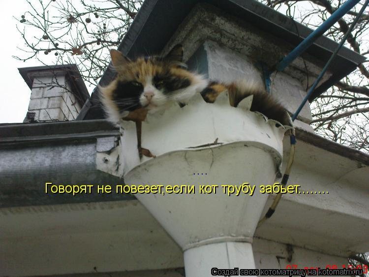 Котоматрица: .... Говорят не повезет,если кот трубу забьет........