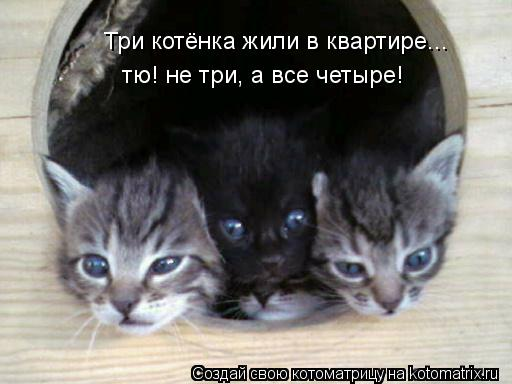 Котоматрица: Три котёнка жили в квартире... тю! не три, а все четыре!