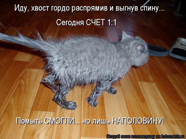 Котоматрица: Иду, хвост гордо распрямив и выгнув спину... Сегодня СЧЕТ 1:1 Помыть СМОГЛИ... но лишь НАПОЛОВИНУ!