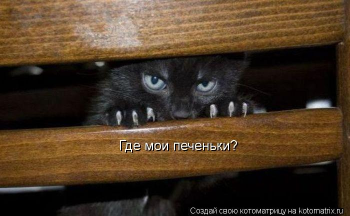 Котоматрица: Где мои печеньки?