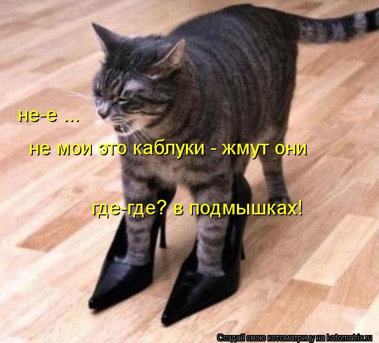 Котоматрица: не-е ... не мои это каблуки - жмут они где-где? в подмышках!