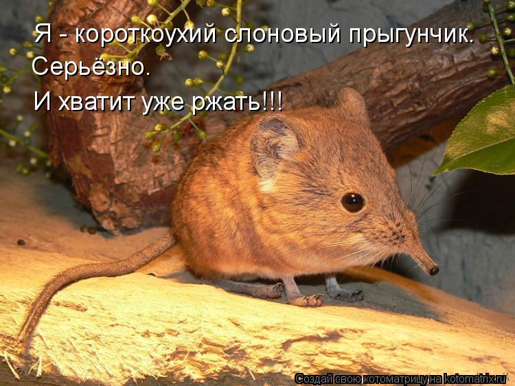 http://kotomatrix.ru/images/lolz/2012/02/16/1112905.jpg