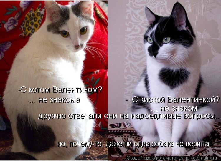 Котоматрица: -С котом Валентином?  ... не знакома                   -  С киской Валентинкой? ... не знаком дружно отвечали они на надоедливые вопросы... но, почему