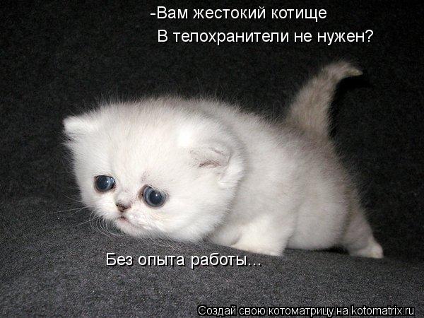 Котоматрица: -Вам жестокий котище  В телохранители не нужен? Без опыта работы...
