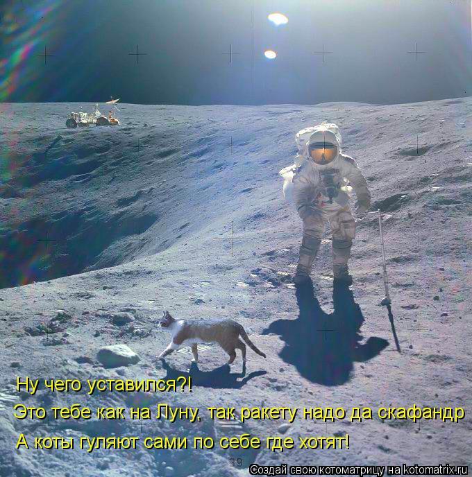 Котоматрица: Ну чего уставился?! А коты гуляют сами по себе где хотят! Это тебе как на Луну, так ракету надо да скафандр