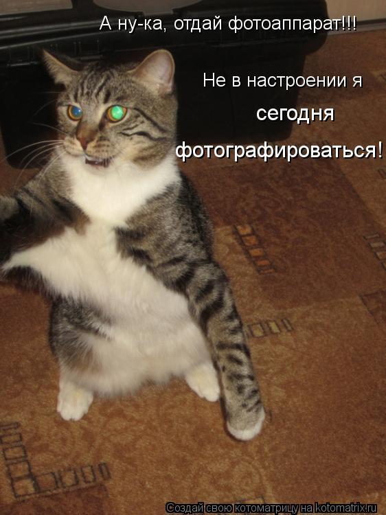 Котоматрица: А ну-ка, отдай фотоаппарат!!! Не в настроении я  сегодня фотографироваться!