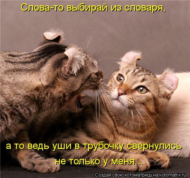 Котоматрица: Слова-то выбирай из словаря, а то ведь уши в трубочку свернулись   не только у меня...