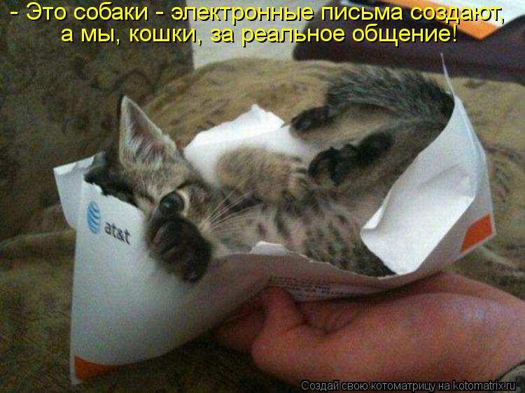 Котоматрица - - Это собаки - электронные письма создают, а мы, кошки, за реальное об