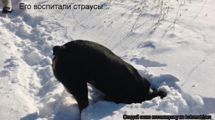 Котоматрица: Его воспитали страусы...