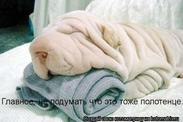 Котоматрица: Главное, не подумать что это тоже полотенце...