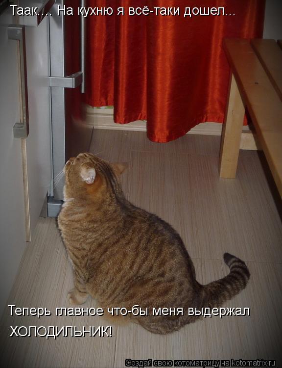 Котоматрица: Таак.... На кухню я всё-таки дошел... Теперь главное что-бы меня выдержал  ХОЛОДИЛЬНИК!