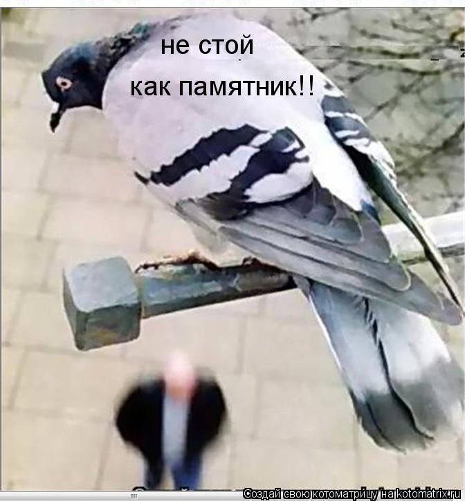 Котоматрица: не стой  как памятник!!